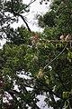 2012-10-22 15-42-26 Pentax JH (49278279187).jpg