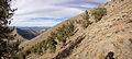 2014-10-13 15 53 37 Panorama of Limber Pines southeast of Kingston Summit, Nevada.JPG