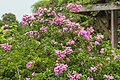2016 Singapur, Ogrody botaniczne (053).jpg