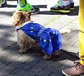2017-04-30, Run for Europe, Hund mit Europaflagge.jpg
