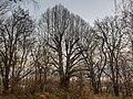 20201129 ND Linde zw Hubmühle Motzenbrunn.jpg