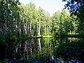 2183. Пруд безымянный на северо-востоке парка Сосновка.jpg