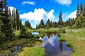 2nd hike of the season into Trophy Meadows in Wells Gray Park - (28545007476).jpg