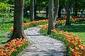 35-101-5005 Dendropark Kropyvnytsky DSC 4478.jpg
