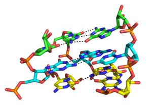 Nucleic acid tertiary structure - Image: 3 layers of triplex