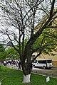 46-112-5007 Stryi Magnolia RB 18.jpg