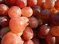 525Grapes in the Philippines 07.jpg