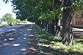 71-231-5032 Mankivka Oak Alley DSC 0805.jpg