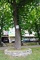 80-385-5005 Kyiv chestnut SAM 9882.jpg