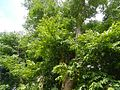 9628ajfTown Proper Pampangafvrf 35.jpg