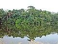 AMA Lago San Pedro Sacha prov Orellana (8227378584).jpg