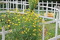 A Collection of Flowers from Ooty043.jpg