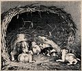 A basket with a bitch and her puppies resting on straw. Chal Wellcome V0021831.jpg