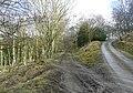 A choice of route in Callis Wood, Erringden - geograph.org.uk - 1755254.jpg