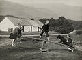 A dog plays on a seesaw with children in Scotland,.jpg