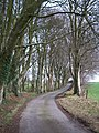 A gentle curve on the Glasfryn driveway - geograph.org.uk - 1777520.jpg