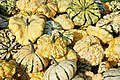A selection of cucurbits from Alkmaar, The Netherlands 06.jpg