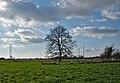 A tree South of Doel, Belgium (DSCF3807).jpg