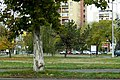A város útjain közlekedve... - panoramio - Szemes Elek (85).jpg