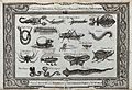 A variety of insects and reptiles from different parts of th Wellcome V0022877.jpg
