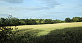 A view east from Gibberd Garden Essex England.JPG