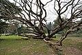 Acharya Jagadish Chandra Bose Indian Botanic Garden - Howrah 2011-02-20 1557.JPG