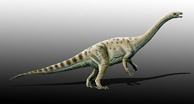 Adeopapposaurus mognai.jpg