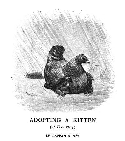 Adopting Kitten With Older Cat