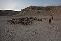 AfMoney-Jalalabad-CON-Herder-0005-2.jpg