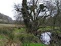 Afon Cerdin - geograph.org.uk - 700261.jpg