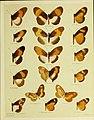 African mimetic butterflies (19586557381).jpg