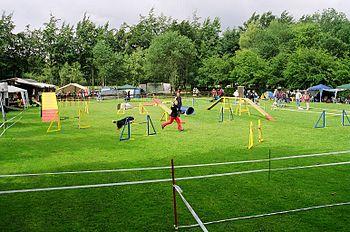agility perros argentina