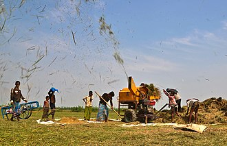 Threshing machine - Threshing of paddy by machine, Bangladesh.