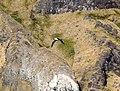 Albatros à bec jaune - panoramio.jpg