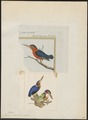 Alcedo picta - 1700-1880 - Print - Iconographia Zoologica - Special Collections University of Amsterdam - UBA01 IZ16800227.tif