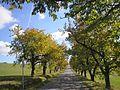 Alej u silnice Pavlov - Stajiště - panoramio.jpg