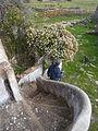Algarve - ruined building steps (13365334935).jpg
