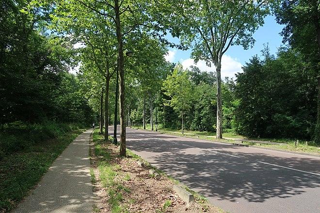 Allée bois de Boulogne 3.jpg