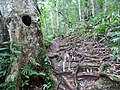 Along the Red Trail - Finca Esperanza Verde - Near Matagalpa - Nicaragua - 02 (31687145205).jpg