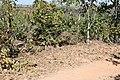 Alto Araguaia - State of Mato Grosso, Brazil - panoramio (598).jpg