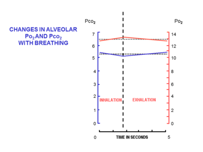 9 the changes in the composition of the alveolar air during a normal  breathing cycle at rest  the scale on the left, and the blue line, indicate  the partial