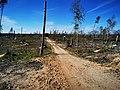 Alzenauer Unterwald Orkanschäden.jpg