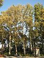 Amin al-Islami Park - Trees and Flowers - Nishapur 033.JPG