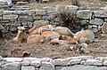 Amphoras in Delos.jpg