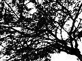 And The Branches Covered The Sky (49026888).jpeg