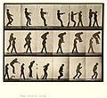 Animal locomotion. Plate 169 (Boston Public Library).jpg