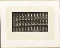Animal locomotion. Plate 87 (Boston Public Library).jpg