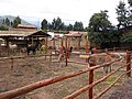 Animals of Peru 140.jpg