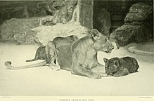 Annual report - New York Zoological Society (1903) (18427026972).jpg