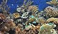 Aquarium marin.jpg